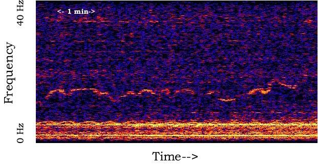 Spektrogram zvuka nazvanog Whistle, u frekvencijskom rasponu od jednog do šest herca - prenisko da bi ljudsko uho registriralo, no ipak postojeće
