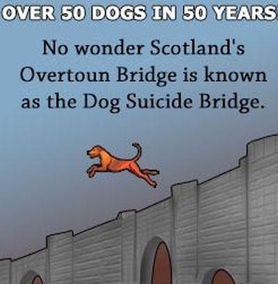 Most Overtoun u Škotskoj također je jedno od omiljenih mjesta za samoubojice, no za razliku od Bruklinškog, Golden gatea ili pak londonskog Archway Bridgea, ovaj ne privlači ljude, već pse!